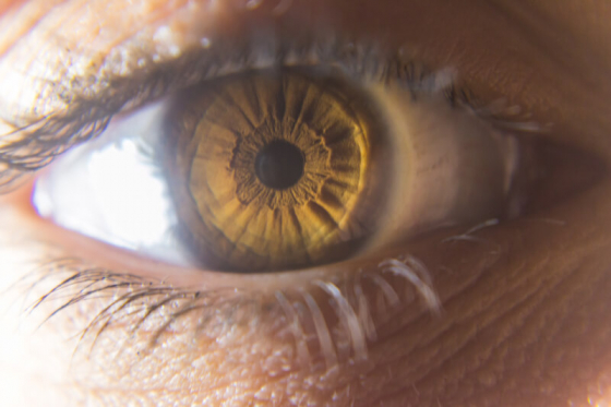 amber eye close up