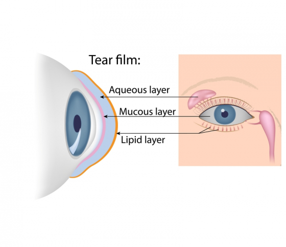 the components of the tear film in the eye
